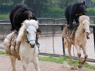 Bears on Horseback